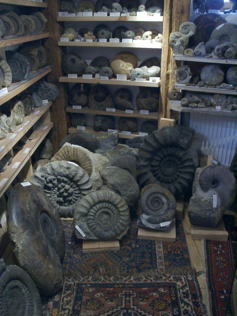 Edes Fossiliensammlung